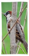 Perching Sparrow Beach Towel