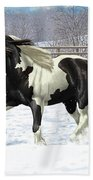 Black Pinto Gypsy Vanner In Snow Beach Towel by Crista Forest