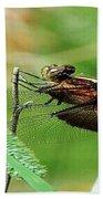 Summer Dragonfly Beach Towel