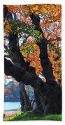Asian Cherry Trees Of Fall Beach Towel