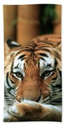 Asian Tiger 5 Beach Towel