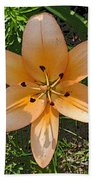 Asiatic Lily With Poster Edges Beach Towel