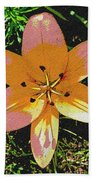 Asiatic Lily With Sandstone Texture Beach Towel