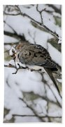 Asleep In The Snow - Mourning Dove Portrait Beach Towel