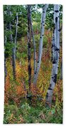Aspen In Fall Beach Towel