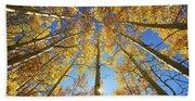 Aspen Tree Canopy 2 Beach Towel