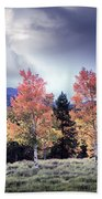 Aspens In Autumn Light Beach Towel