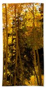 Aspens In Fall Beach Towel