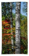 Aspens In Fall Forest Beach Towel
