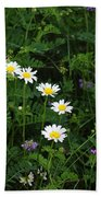 Aster And Daisies Beach Towel