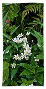 Asters And Fringed Grass-of-parnassus And Red Monkeyflowers On Highline Trail In Glacier National Pa Beach Towel