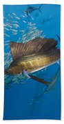 Atlantic Sailfish Hunting Beach Towel