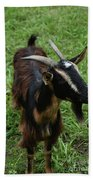 Attractive Goat Standing In A Grass Field On A Farm Beach Towel