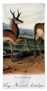 Audubon: Antelope, 1846 Beach Towel