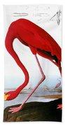 Audubon: Flamingo, 1827 Beach Towel