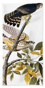 Audubon: Hawk Beach Towel