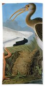 Audubon: Ibis Beach Towel