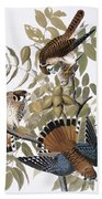 Audubon: Kestrel, 1827 Beach Towel
