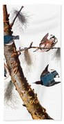 Audubon: Nuthatch Beach Towel