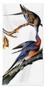 Audubon: Passenger Pigeon Beach Towel