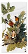Audubon: Robin Beach Towel