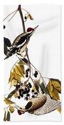 Audubon Sapsucker, 1827-38 Beach Towel