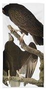Audubon: Turkey Vulture Beach Towel
