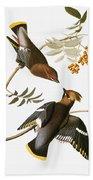 Audubon: Waxwing Beach Towel