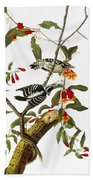 Audubon: Woodpecker, 1827 Beach Towel