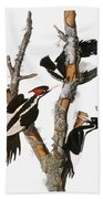 Audubon: Woodpecker Beach Towel