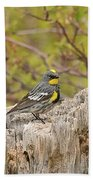 Audubon's Yellow Rumped Warbler Beach Towel