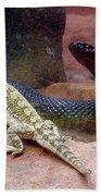 Australia - The Taipan Snake Beach Towel