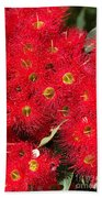 Australian Native Eucalyptus Flowers Beach Towel