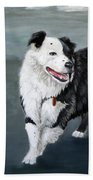 Australian Shepard Border Collie Beach Towel