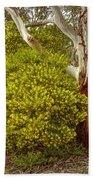 Australian Wattles Bush And Candlebark Gum Tree Beach Towel