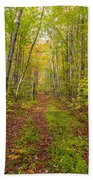 Autumn Birch Woods Beach Towel