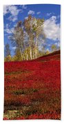 Autumn Birches And Barrens Beach Towel