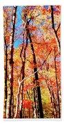 Autumn Canopy Beach Towel