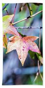 Autumn Color Changing Leaves On A Tree Branch Beach Towel