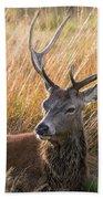 Autumn Deer Beach Towel
