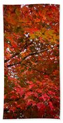 Autumn Foliage-1 Beach Towel