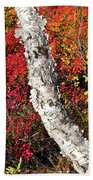 Autumn Foliage In Finland Beach Towel