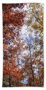 Autumn Forest Canopy Beach Towel