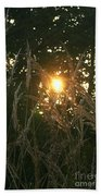 Autumn Grasses In The Morning Beach Towel