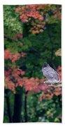 Autumn Hawk Square Beach Towel