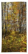 Autumn In The Birches Forest Beach Towel