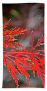 Autumn Japanese Maple Beach Towel