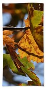 Autumn Leaves Macro 1 Beach Towel