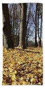 Autumn Maple Forest - Massachusetts Usa Beach Sheet