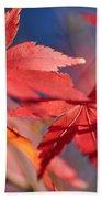 Autumn Maple Beach Towel